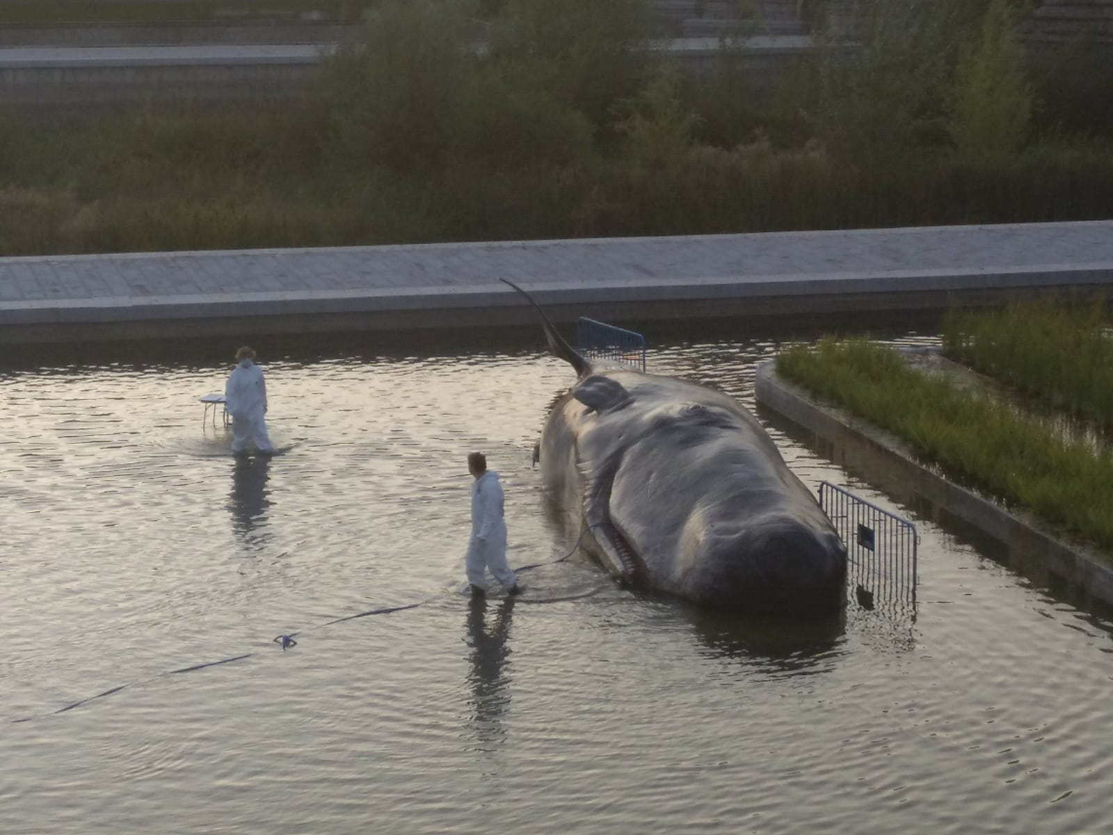Una ballena en Madrid